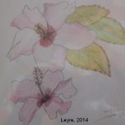 Flores al natural